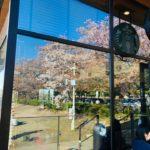 富山富岩運河環水公園のスターバックス