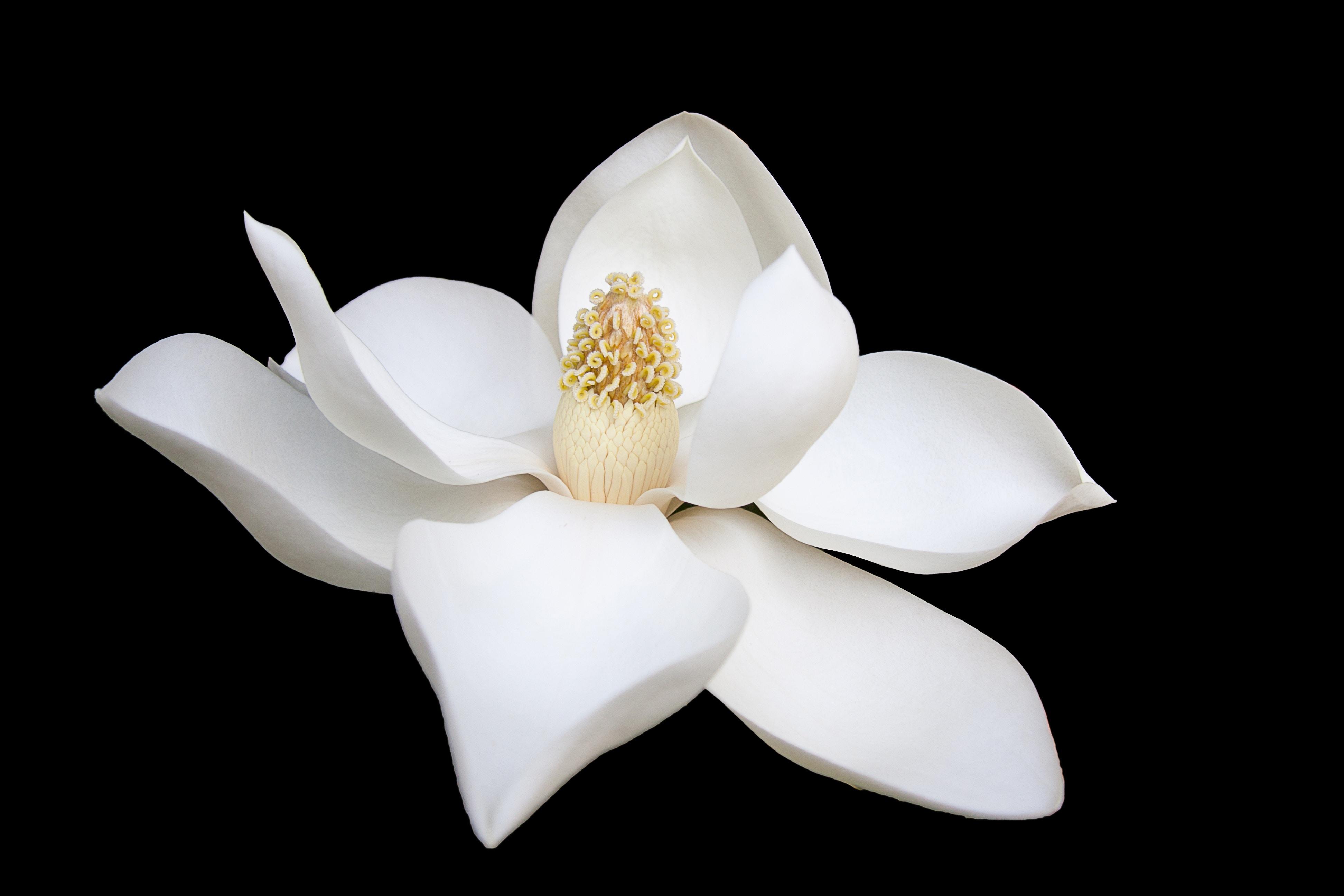 天邪鬼な人も本心はひとつ。たったひとつの花を大切に咲かせましょう